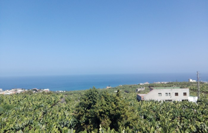 A1238. Large apartment with views of the ocean and banana plantations.